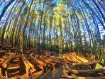 Imogiri Pine Forest (Hutan Pinus Imogiri