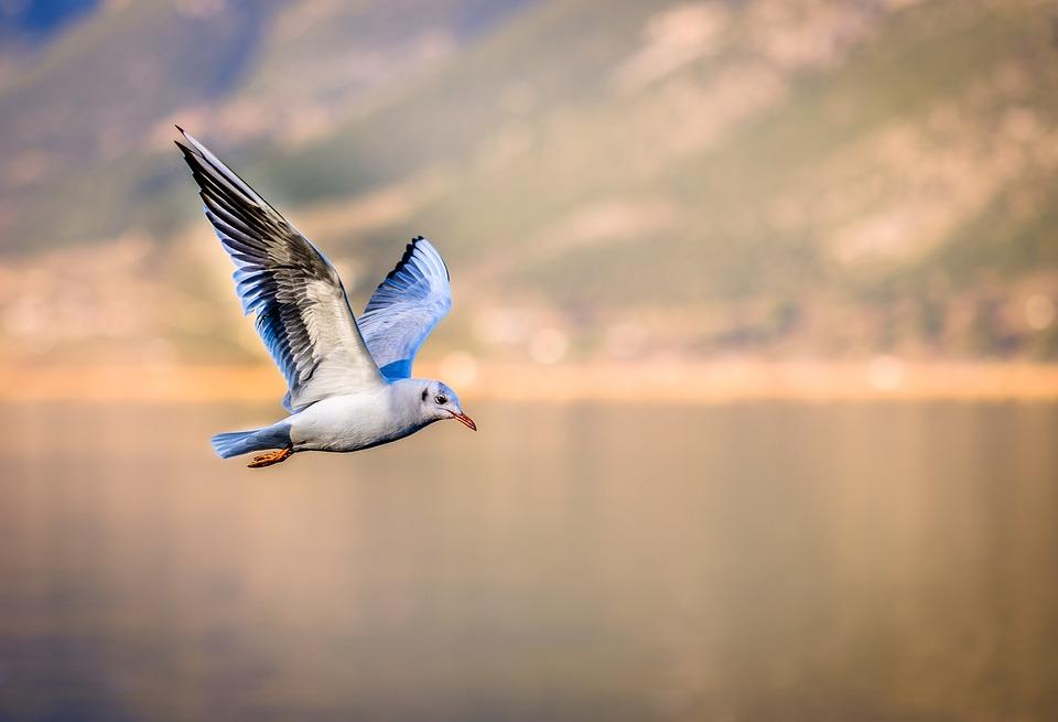 Info Lengkap Harga, Ternak dan Suara Burung Hanya di Pengicau.Net
